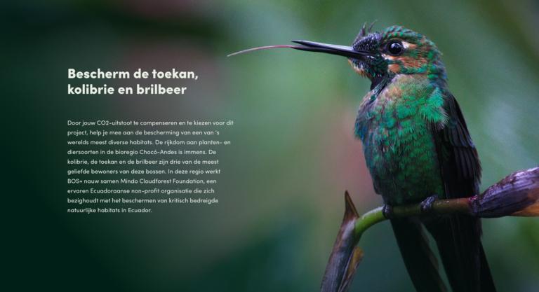 Treecological, BOS+, logo, branding, grafisch ontwerp Antwerpen, iconen, Logo Ontwerp, merkidentiteit, website, online, calculator